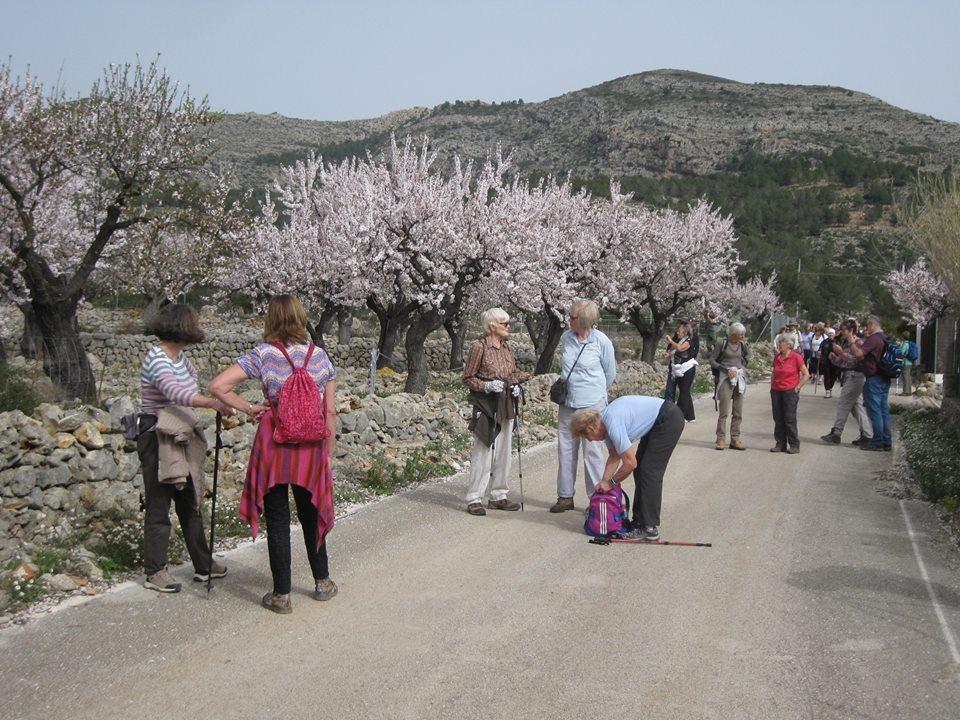 Angela's Almond Blossom Walk