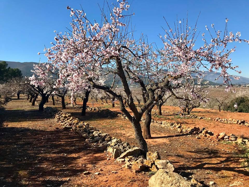 Almond Blossom Festival 2019